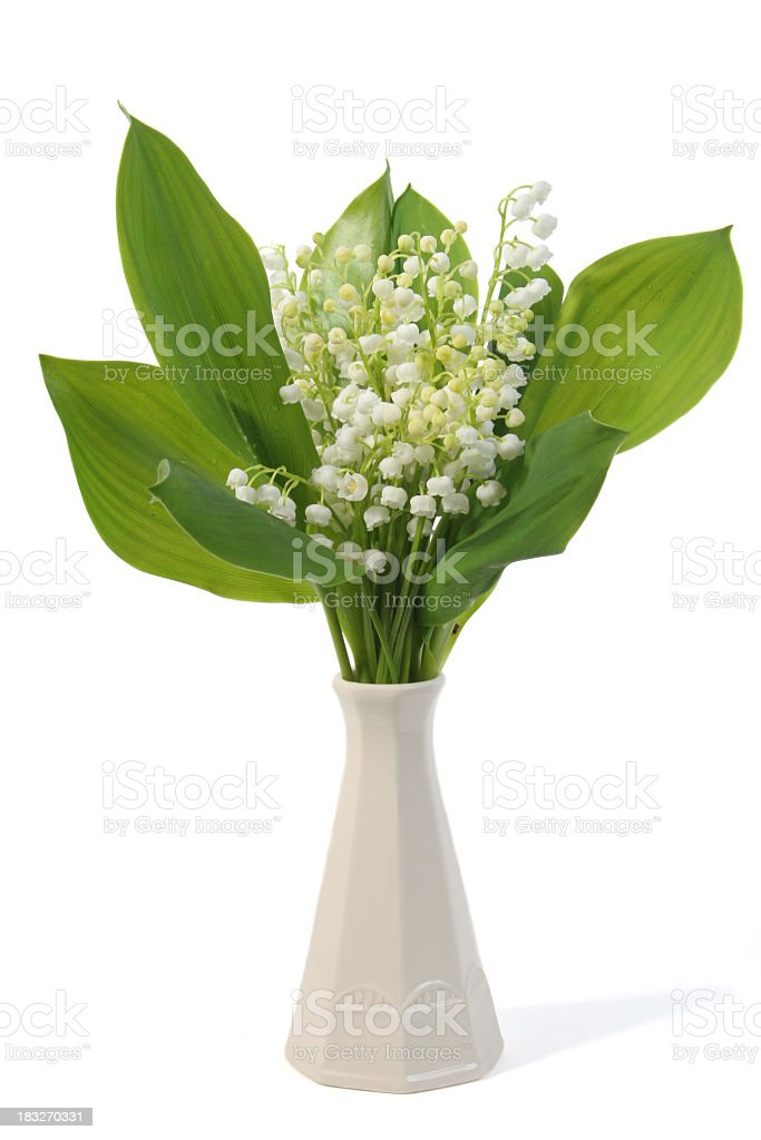 Vase with Lily-of-the-valley on white royalty-free stock photo
