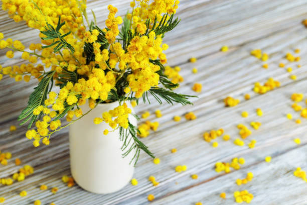 vase with mimosa flowers on rustic wooden table background. yellow fluffy flowers mimosa in white ceramic vase. selective focus. - immagini mimosa 8 marzo foto e immagini stock