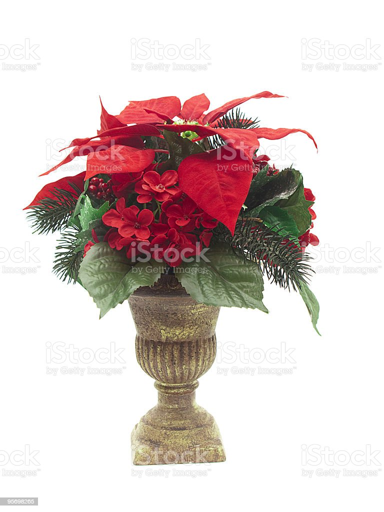 Jarrón Arreglo Floral Con Flor De Nochebuena Foto De Stock Y