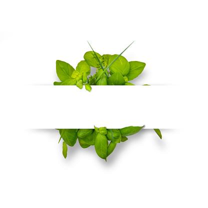 vegan lifestyle healthy eating salad on white background