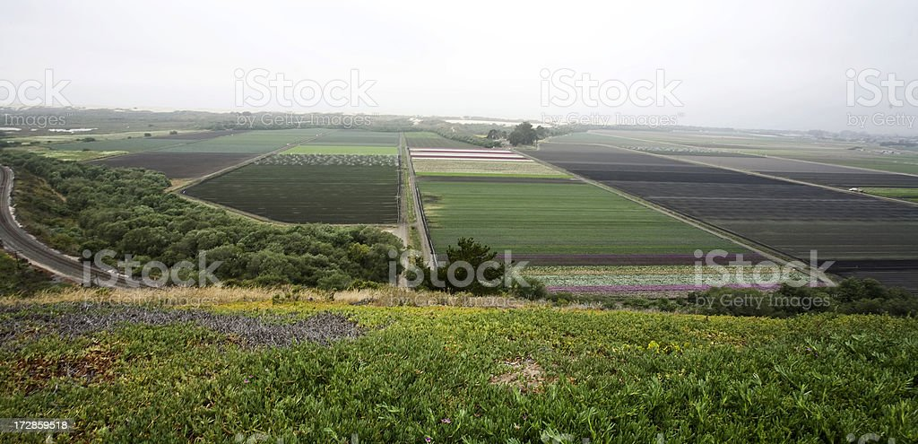 Vegetable and Flower Fields stock photo