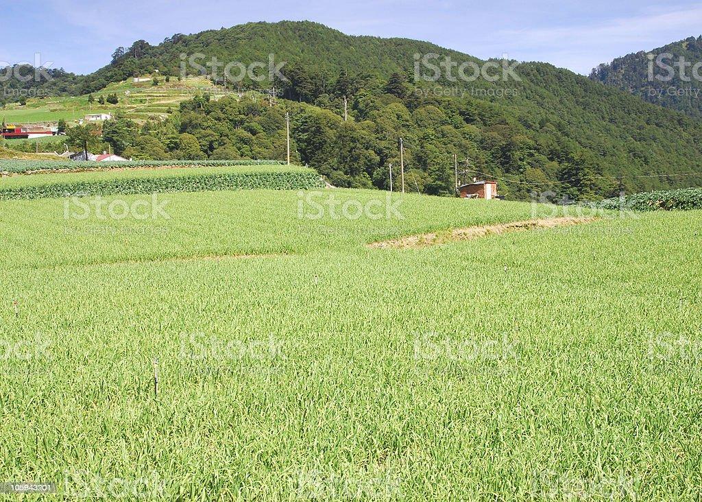 vegetable  farm royalty-free stock photo