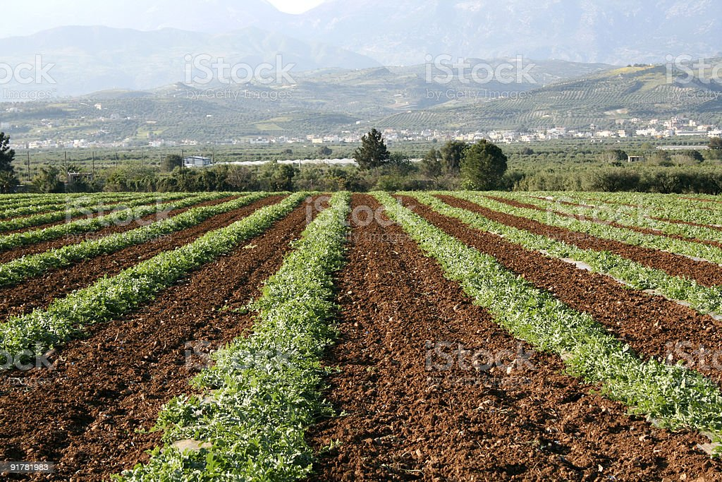 Vegetable Field  - Crete royalty-free stock photo
