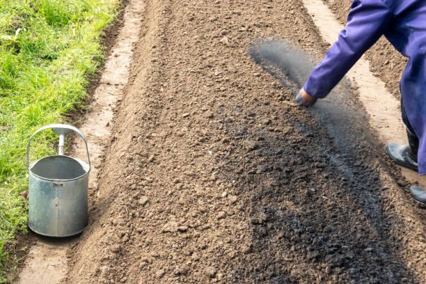 Campo vegetal con fertilizante de fosfato y semillas mezcladas - foto de stock