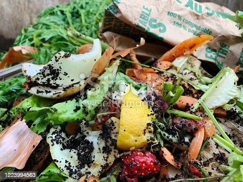 Vegetable, fruit and coffee ground food waste composts in a backyard bin. Paper recycling bag has words