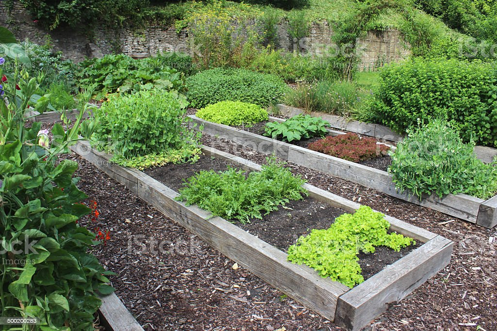 Vegetable garden allotment image with raised beds, runner bean flowers stock photo