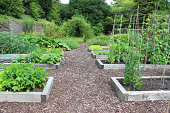 Photo showing an organic community vegetable garden allotment with a series of small raised beds made from reclaimed railway sleepers.  Planted in the beds are potato plants, parsnips, ornamental sweet peas, garden peas, runner beans, various different types of lettuce, carrots, broad beans, French beans, onions and rhubarb.