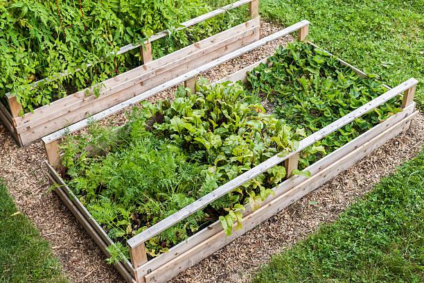 Gemüsegarten in erhöhter Boxen – Foto