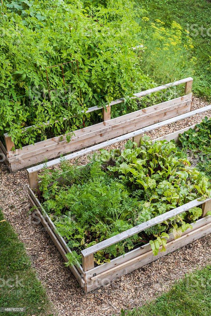 Vegetable garden in raised boxes stock photo