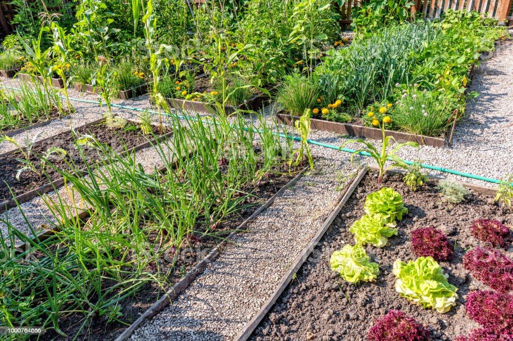 Gemüsegarten im Saison – Foto