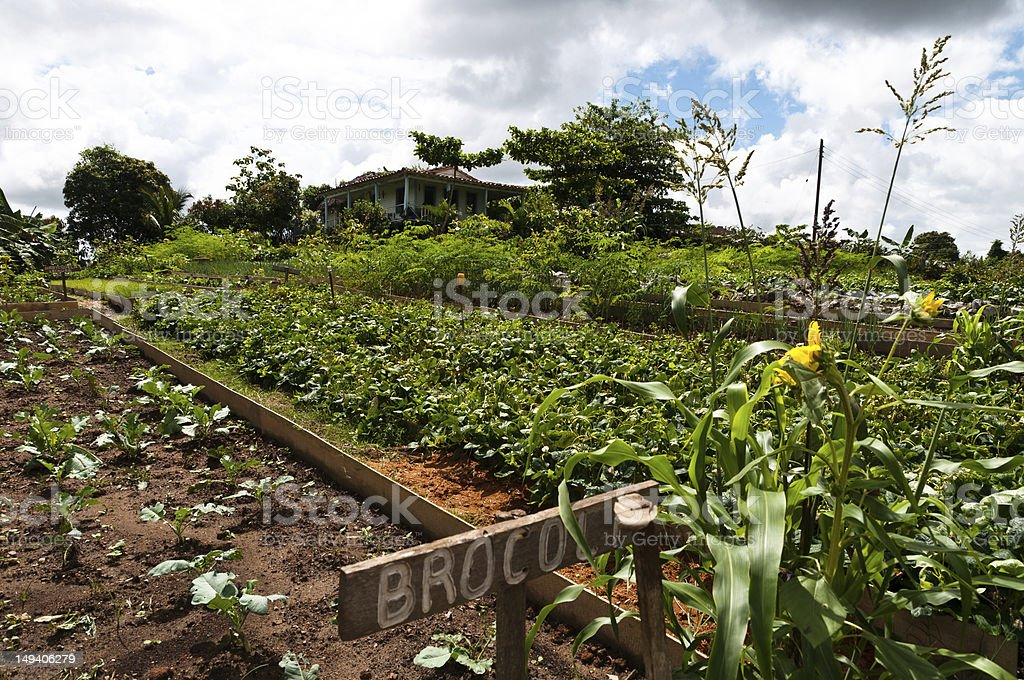 Vegetable Garden in Vinales Valley, Cuba royalty-free stock photo