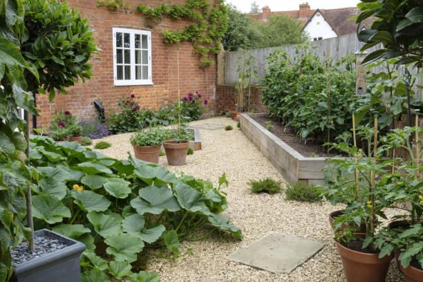 Vegetable garden kitchen garden stock photo