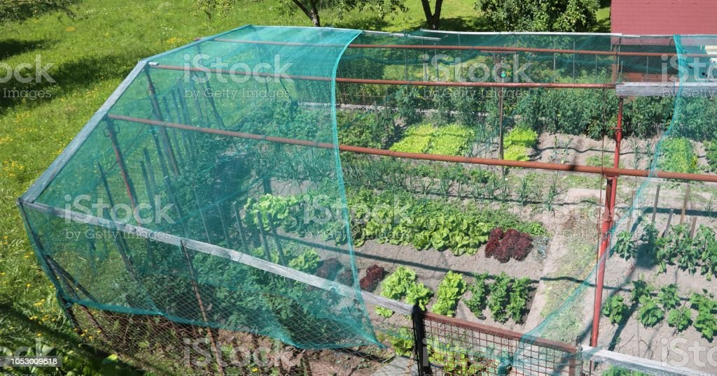Vegetable Garden Of A House With A Hail And Bird Protection Net