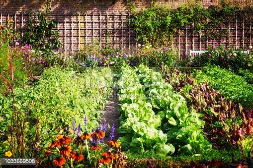 istock Vegetable garden 1033669508