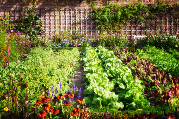 gemüsegarten - urbaner garten stock-fotos und bilder