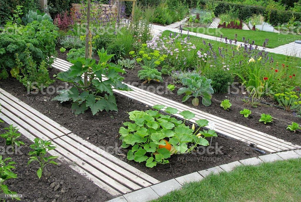 Vegetable garden royalty-free stock photo