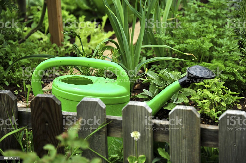 Vegetable garden royalty-free stock photo