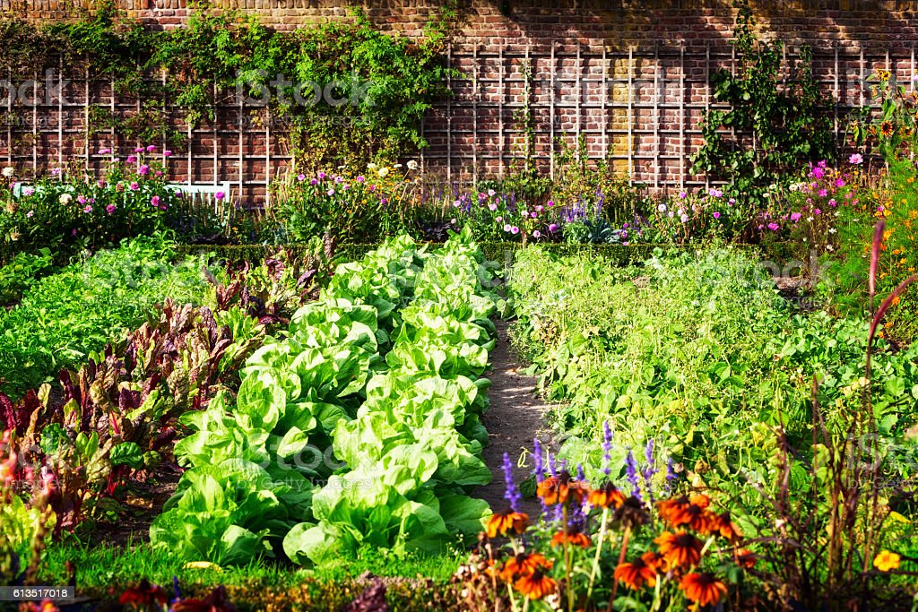 Vegetable garden Vegetable garden in late summer. Herbs, flowers and vegetables in backyard formal garden. Eco friendly gardening Agriculture Stock Photo