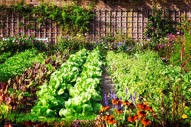vegetable garden - formal garden stock photos and pictures