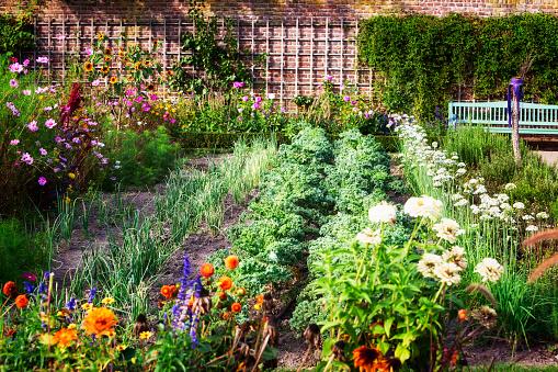 istock Vegetable garden 613517354