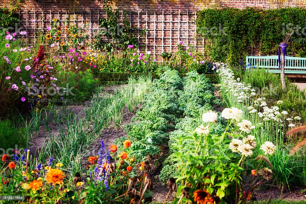 Vegetable garden stock photo