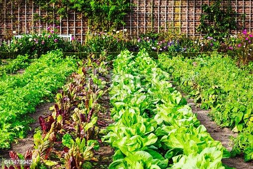 istock Vegetable garden 641479942