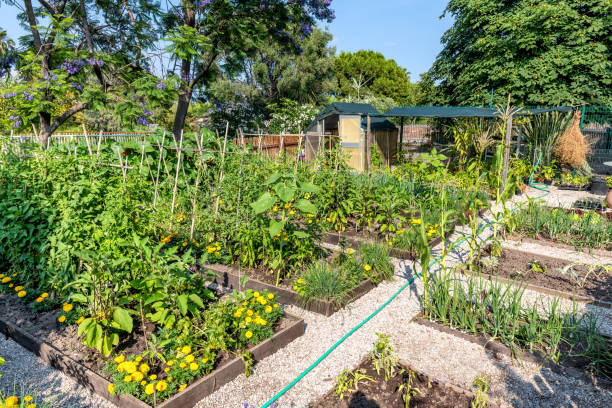 Vegetable garden Horizontal color image of vegetable garden. community garden stock pictures, royalty-free photos & images