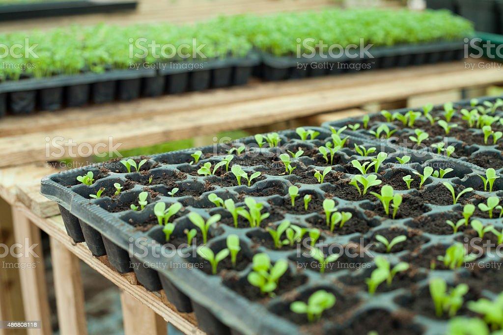 Vegetable garden seedlings . stock photo