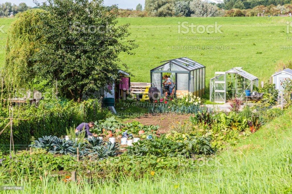 Moestuin met een groen huis foto