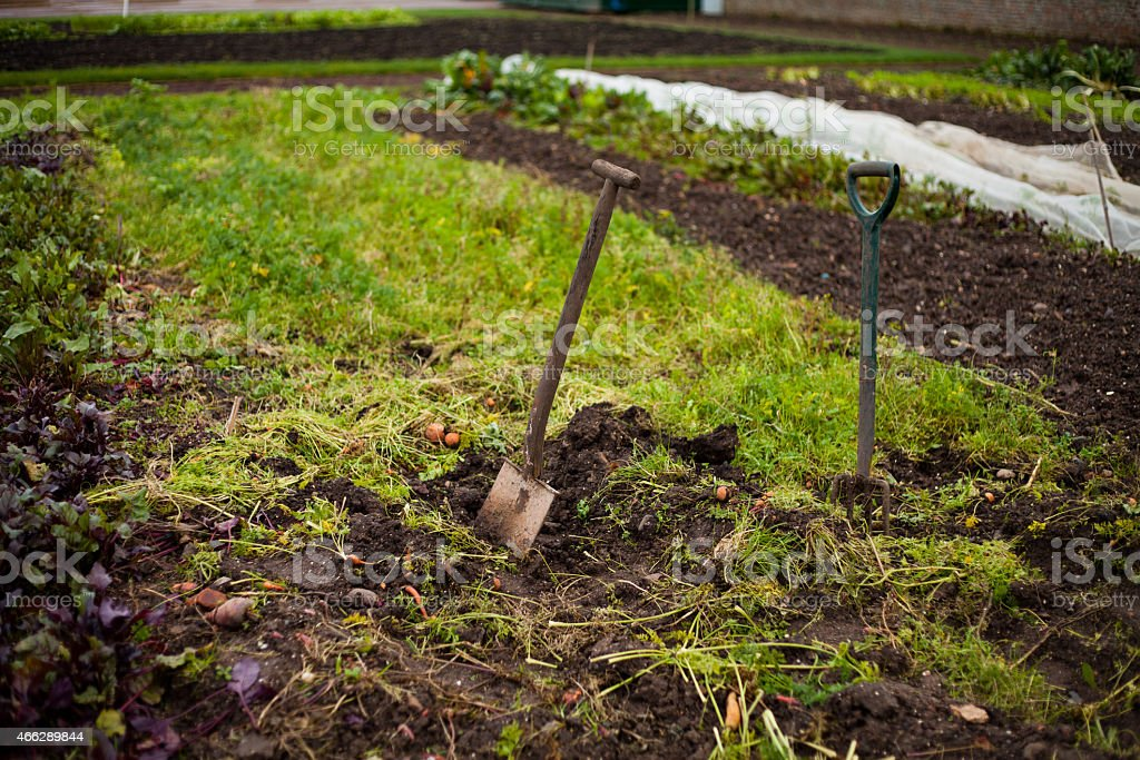 Vegetable Garden With Tools Stock Photo Download Image Now Istock