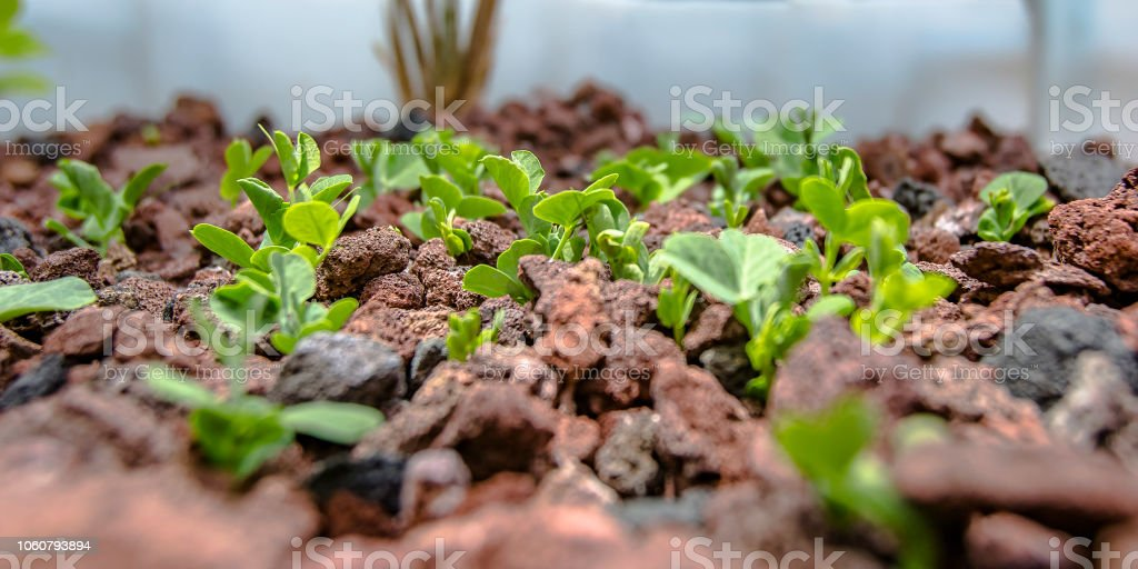 Vegetable growing without soil in an Aquaponics stock photo