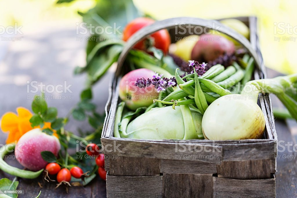 vegetable harvest freshness from garden autmun stock photo