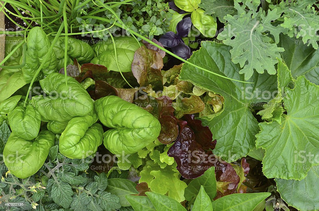 Vegetable patch stock photo