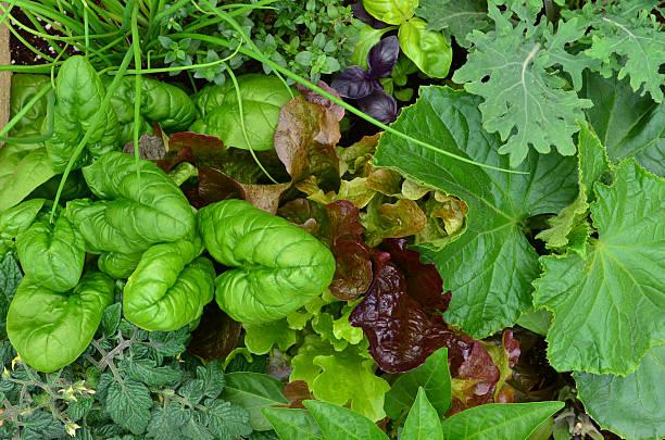 patch de légumes - Photo