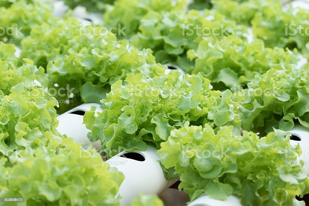 Légumes - Photo