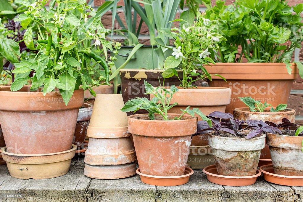 Gemüse pflanzen – Foto