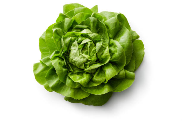 Vegetables: Bib Lettuce Isolated on White Background Vegetables: Bib Lettuce Isolated on White Background butterhead lettuce stock pictures, royalty-free photos & images