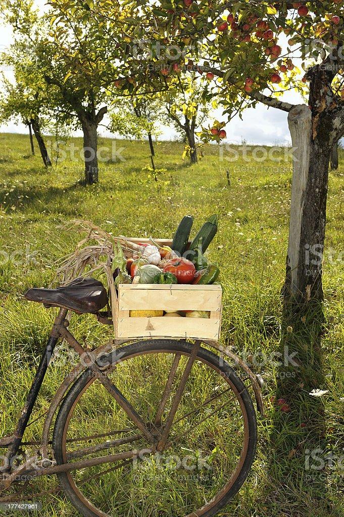 vegetables bike four royalty-free stock photo