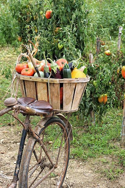 vegetables bike stock photo