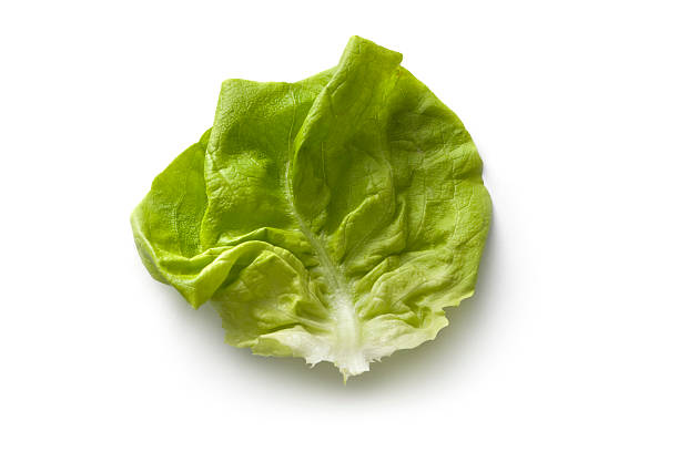 Vegetables: Butterhead Lettuce Isolated on White Background More Photos like this here... butterhead lettuce stock pictures, royalty-free photos & images