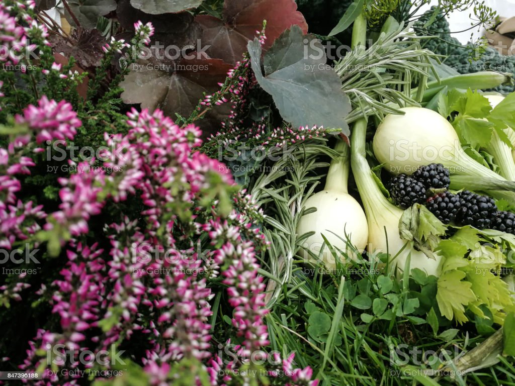 Vegetables from the Nordic country in Scandinavian