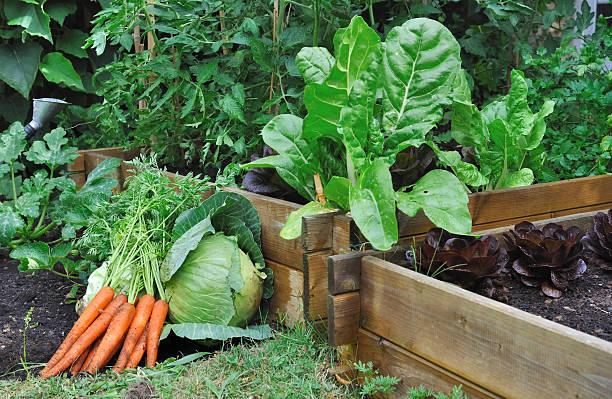 Verduras en un parche - foto de stock