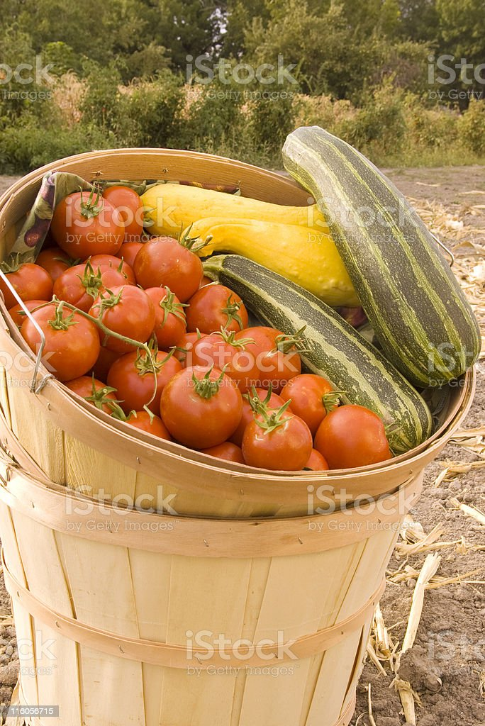 vegetables in basket royalty-free stock photo