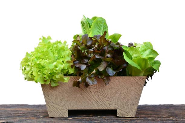 Gemüse im Blumentopf auf Holztisch. Gesunde Bio-Lebensmittel. – Foto