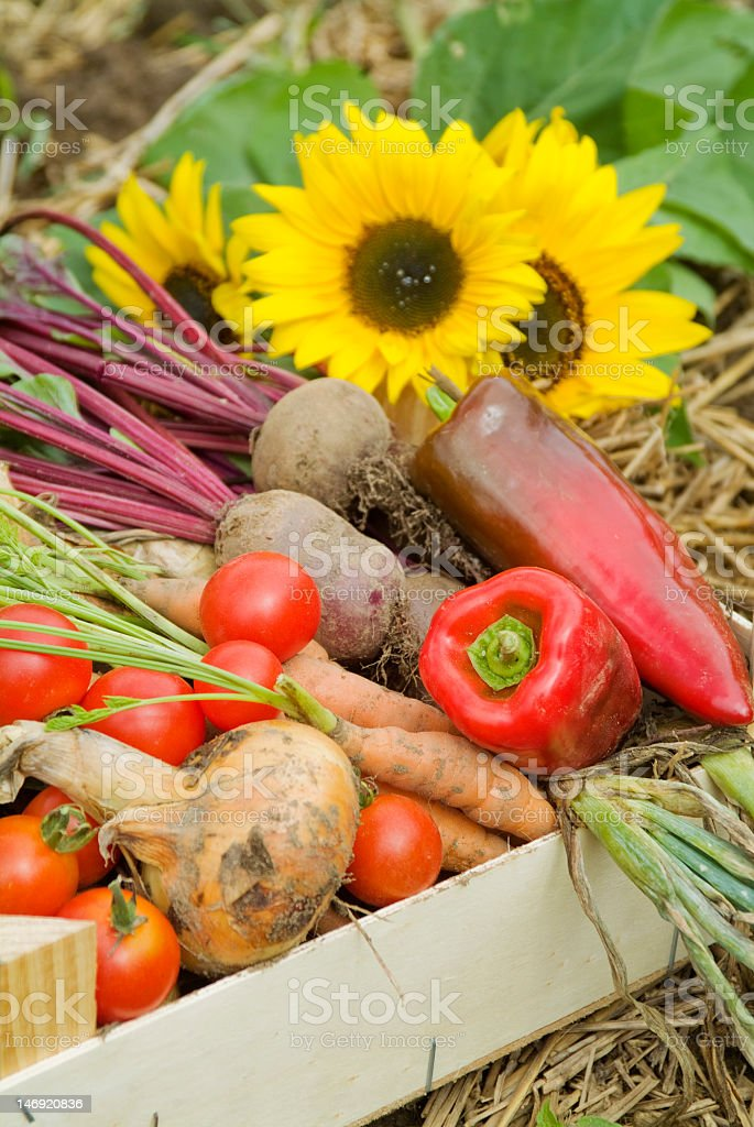Vegetables Just Picked from the Garden royalty-free stock photo