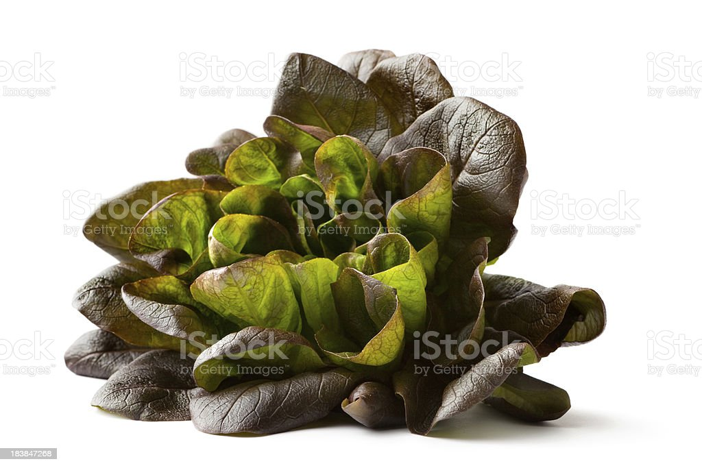 Vegetables: Lollo Rosso Lettuce Isolated on White Background stock photo