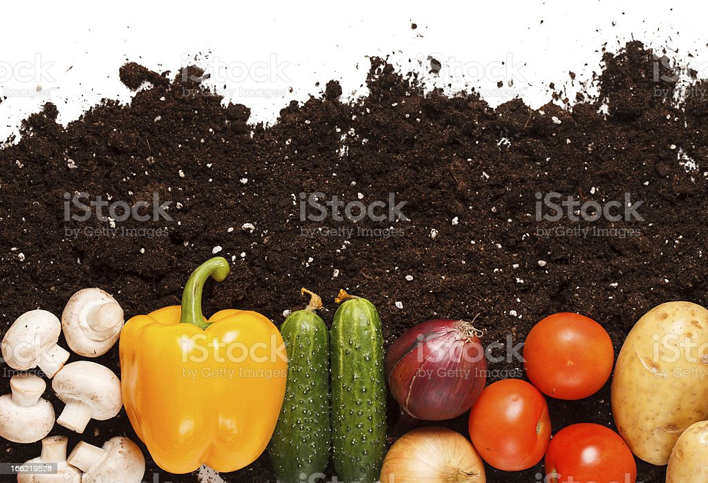 vegetables on the soil royalty-free stock photo