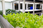 Vegetables planted in greenhouse