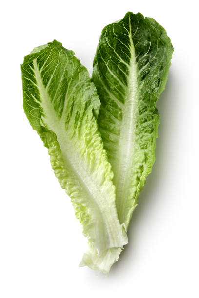 vegetables: romaine lettuce isolated on white background - lettuce stock pictures, royalty-free photos & images