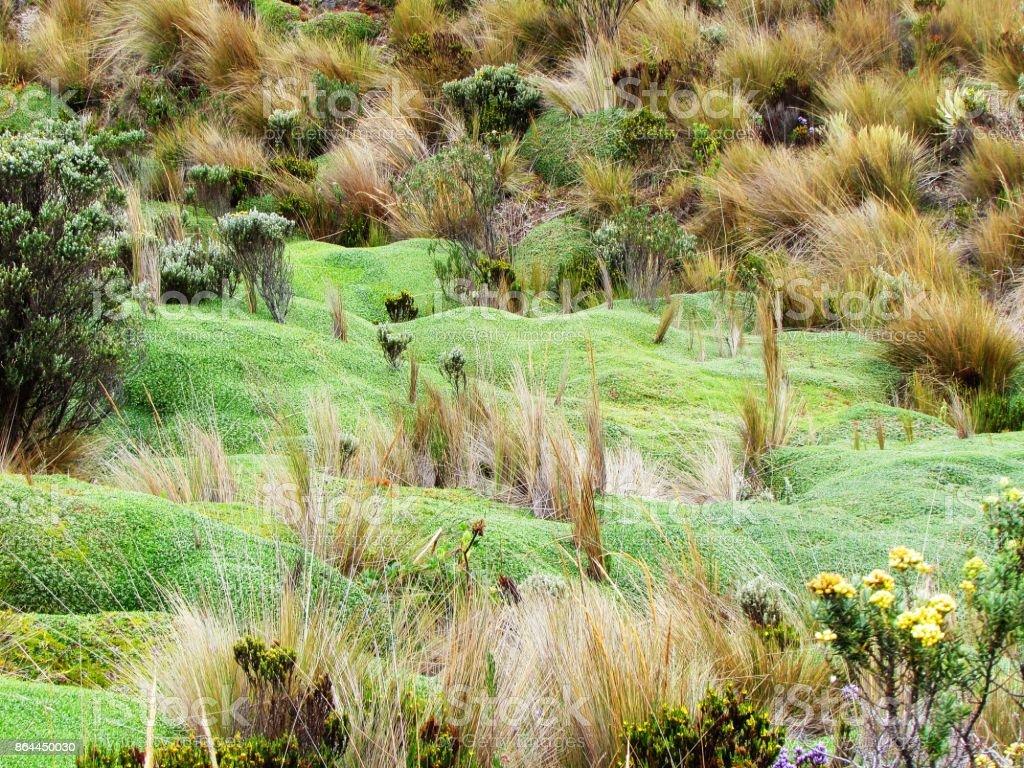Vegetación Nevado stock photo